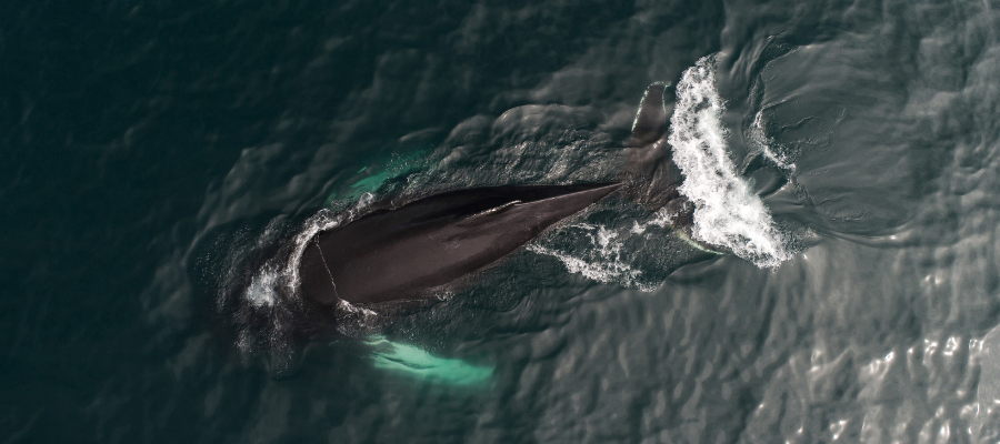 An image from our Earth Day whale quiz